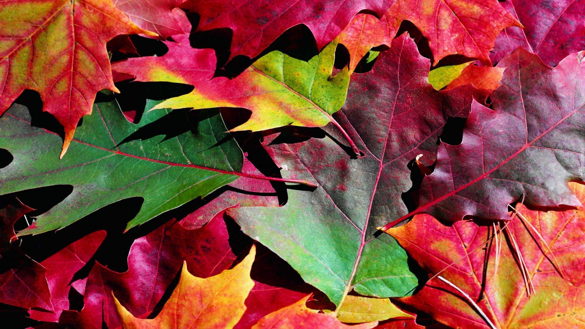 jesień-oferta33